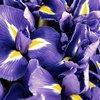 Ralph Lauren Polo Blue Woda Perfumowana (40 ml)